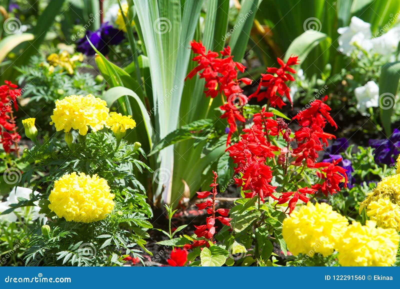 Flores del macizo de flores Cama plantada del jardín de flores bajo la forma de A.C.
