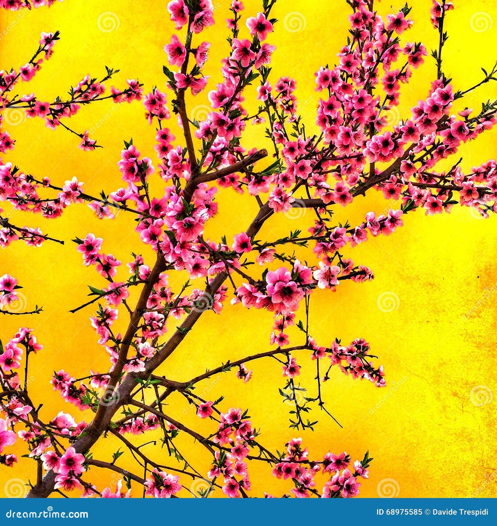 Flores del melocotón en el jardín