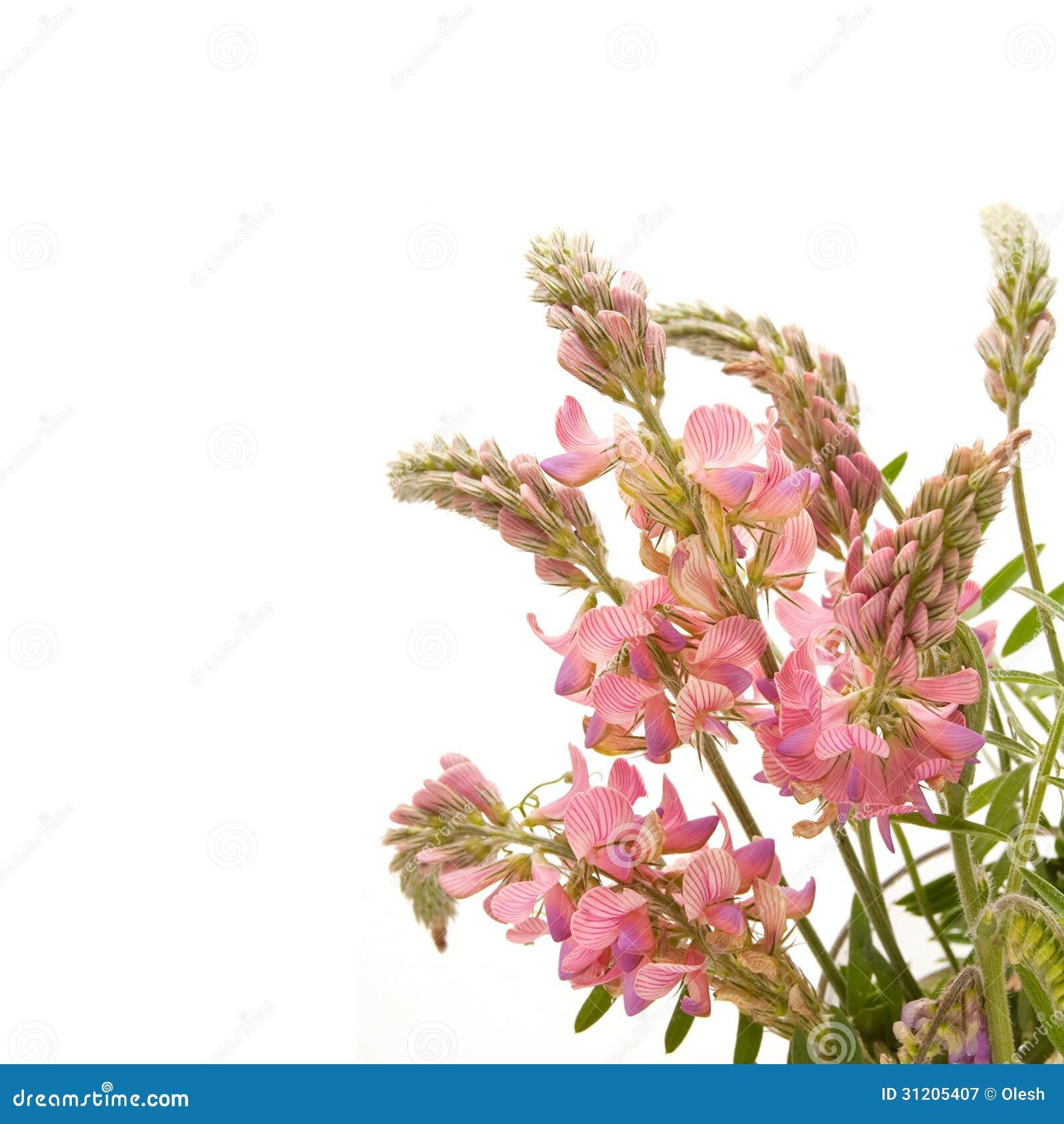 Resultado de imagen de flores del pipirigallo
