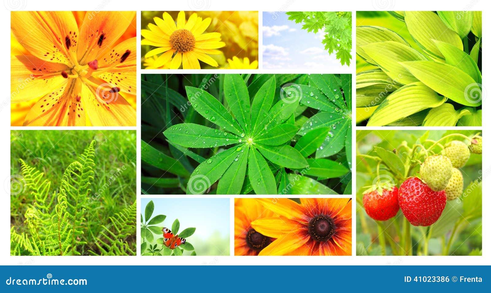 Flores del verano, hojas del verde y mariposa