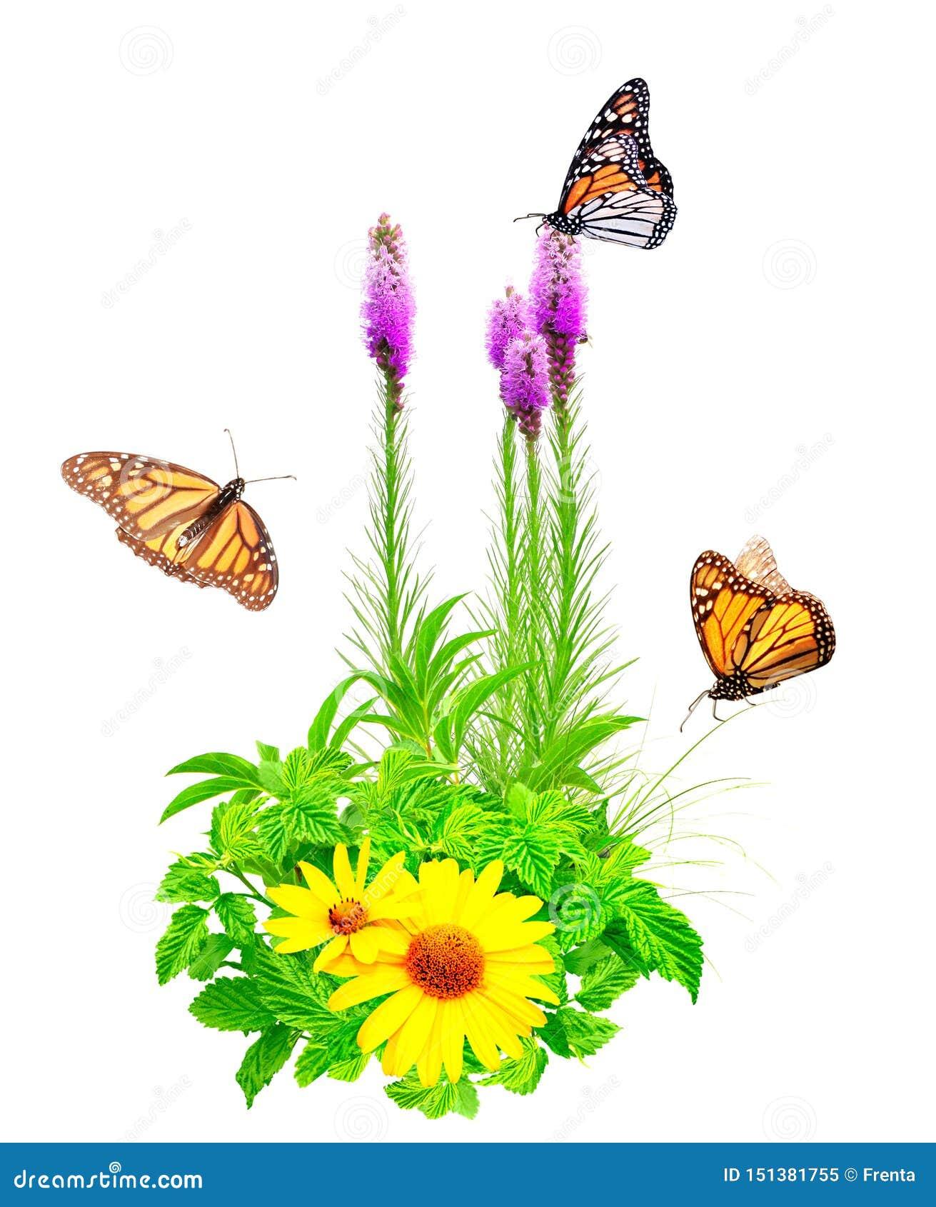 Flores del verano, hojas verdes y mariposas de monarca