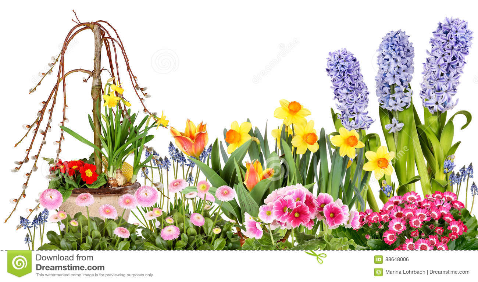 Flores diferentes da mola