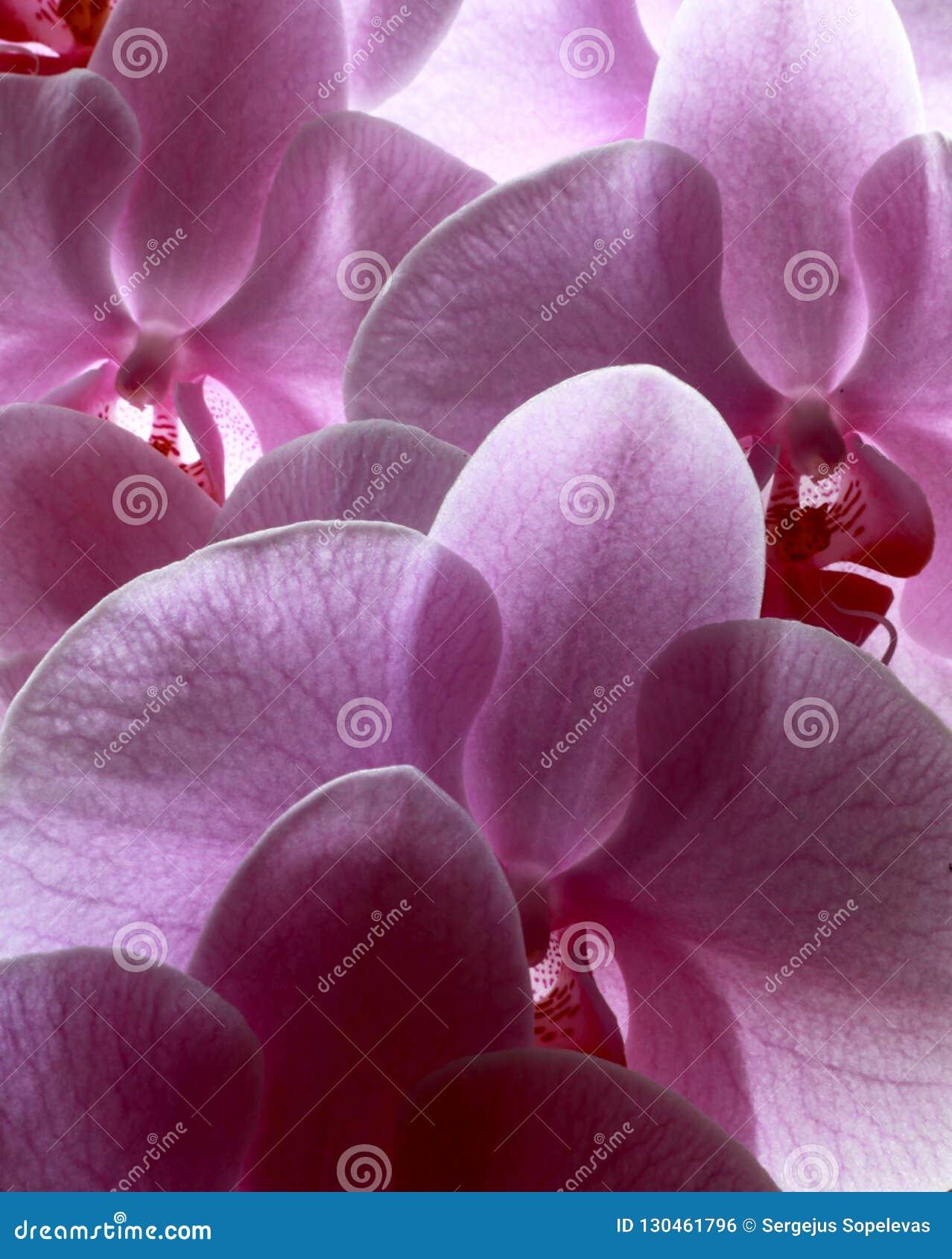 Flores do amor