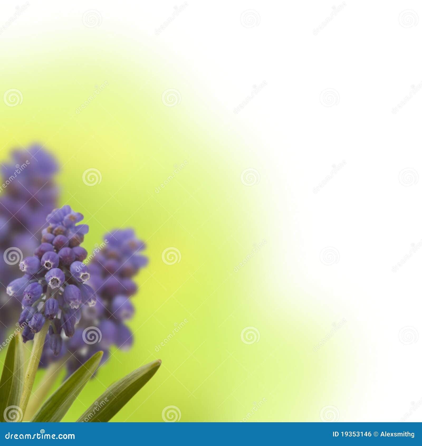 Flores do azul da mola
