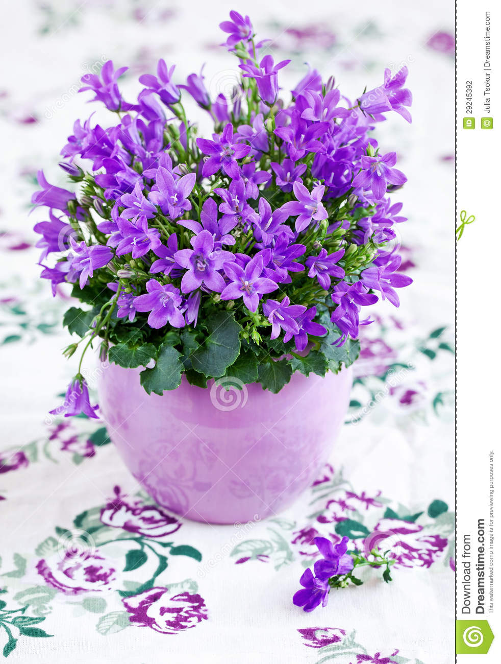 Download Flores do Campanula foto de stock. Imagem de bluebell - 29245392