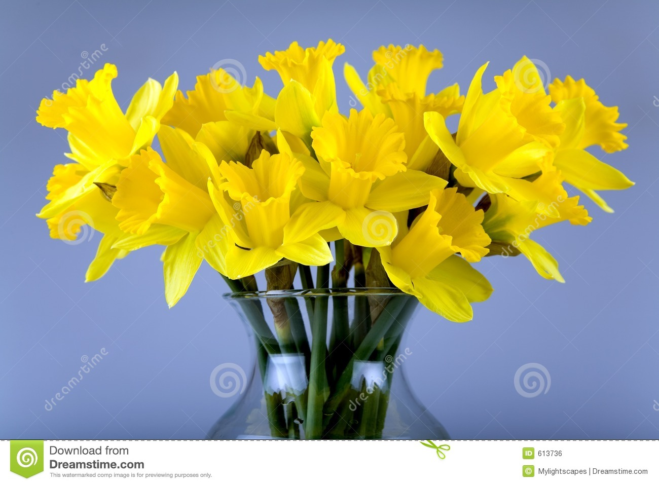 Flores do Daffodil