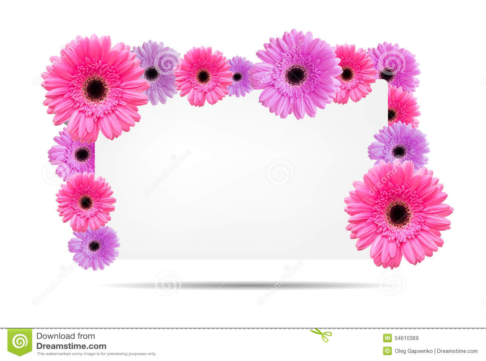 Flores Do Gerbera Com Molde Branco Do Cartu00e3o Imagens de Stock Royalty ...