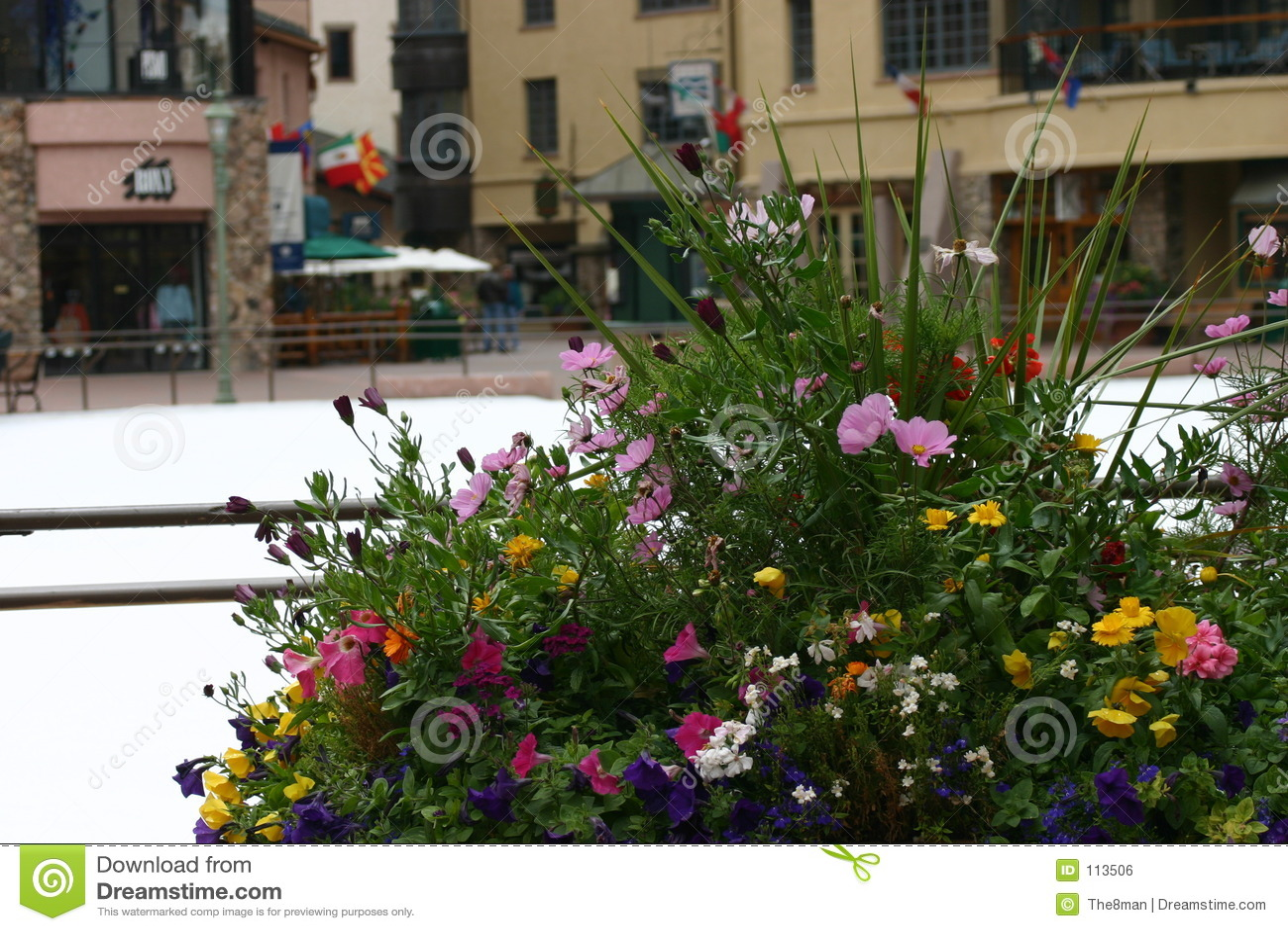 Flores do inverno