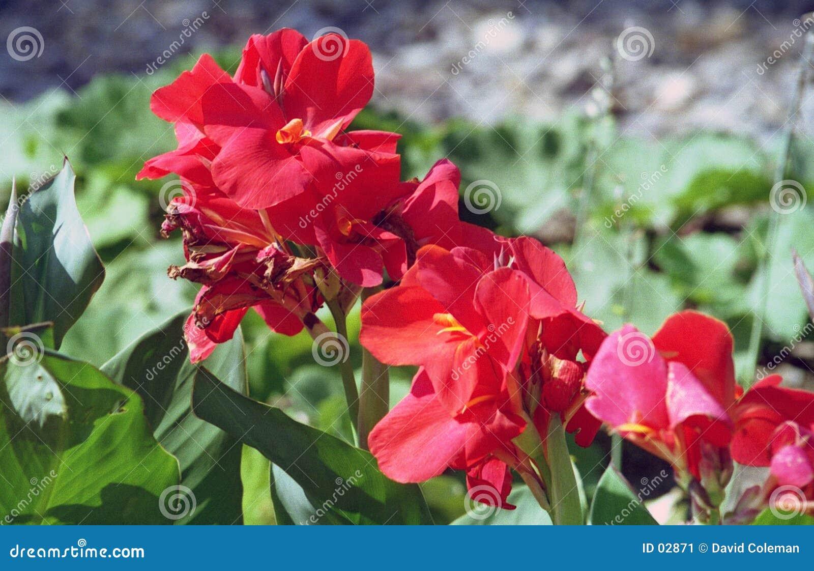 Flores Do Jardim Imagem de Stock  Imagem 2871
