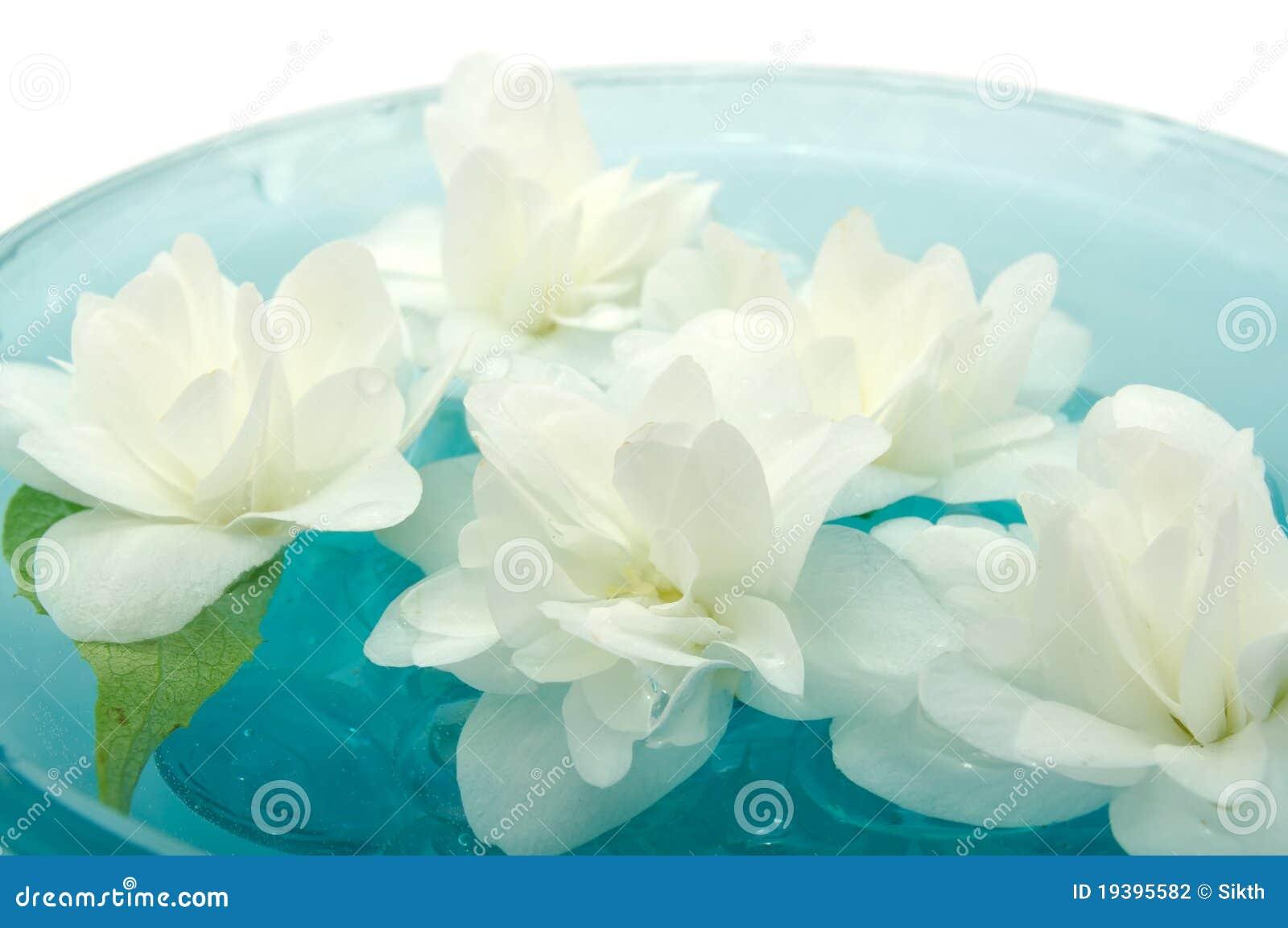 Flores do jasmim que flutuam na água