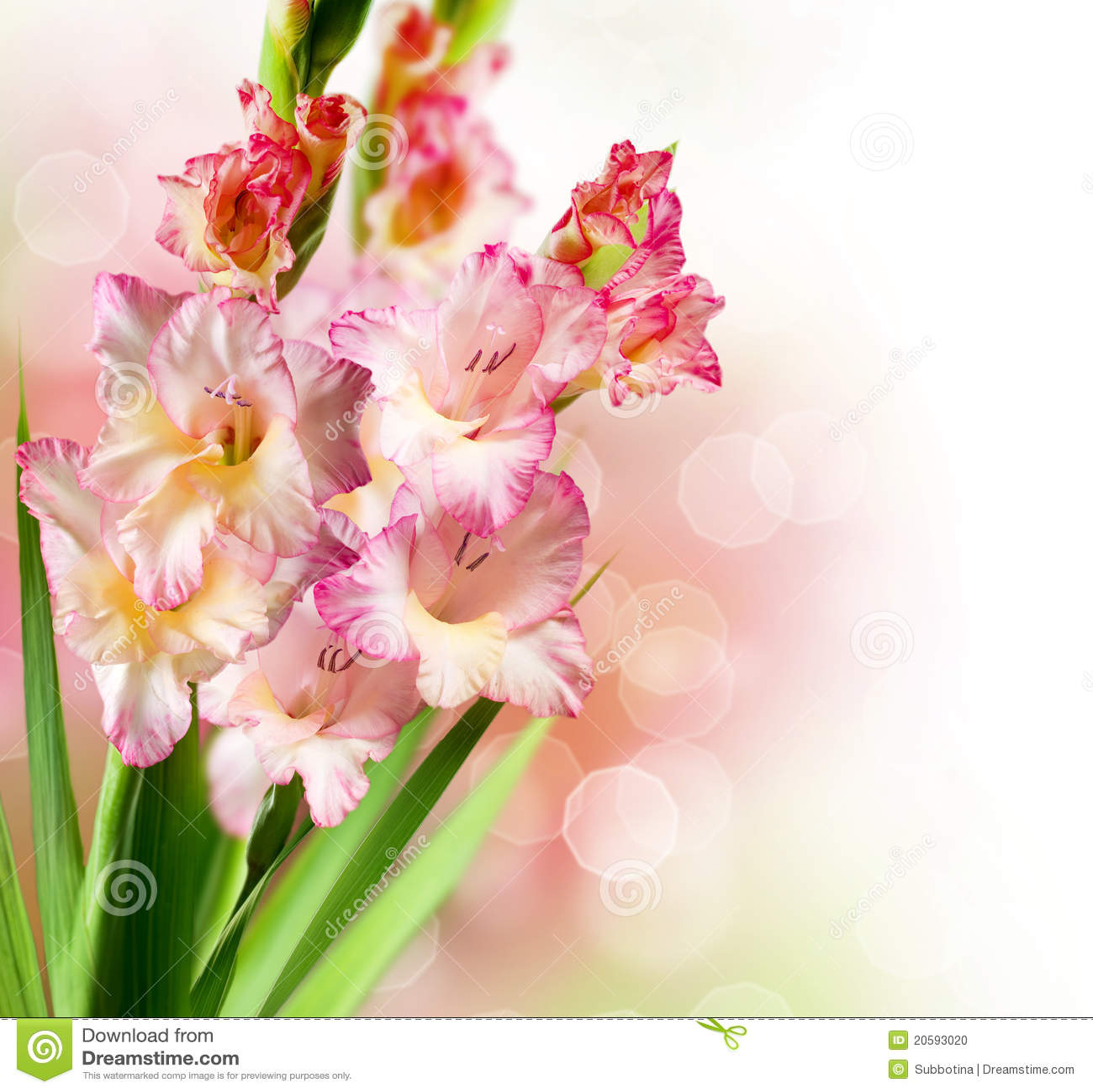 Flores do tipo de flor foto de stock imagem 20593020 - Tipos de plantas ...