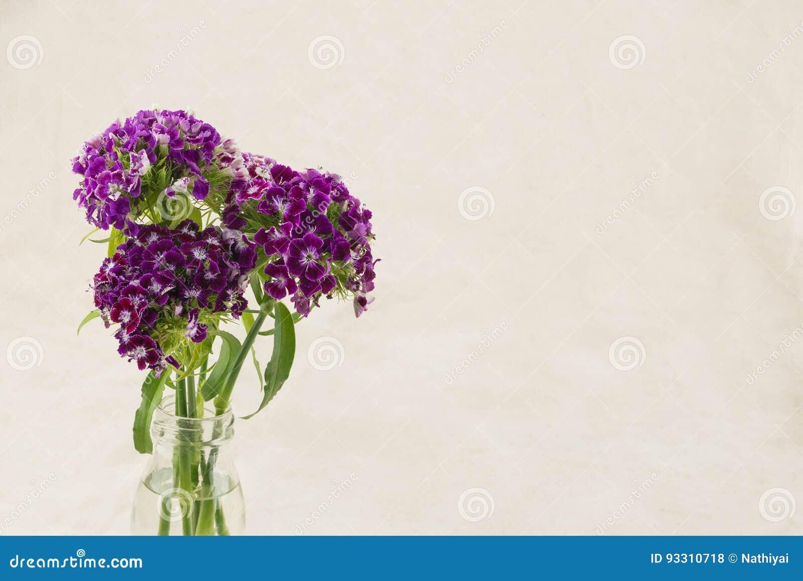 Flores dulces púrpuras de Guillermo
