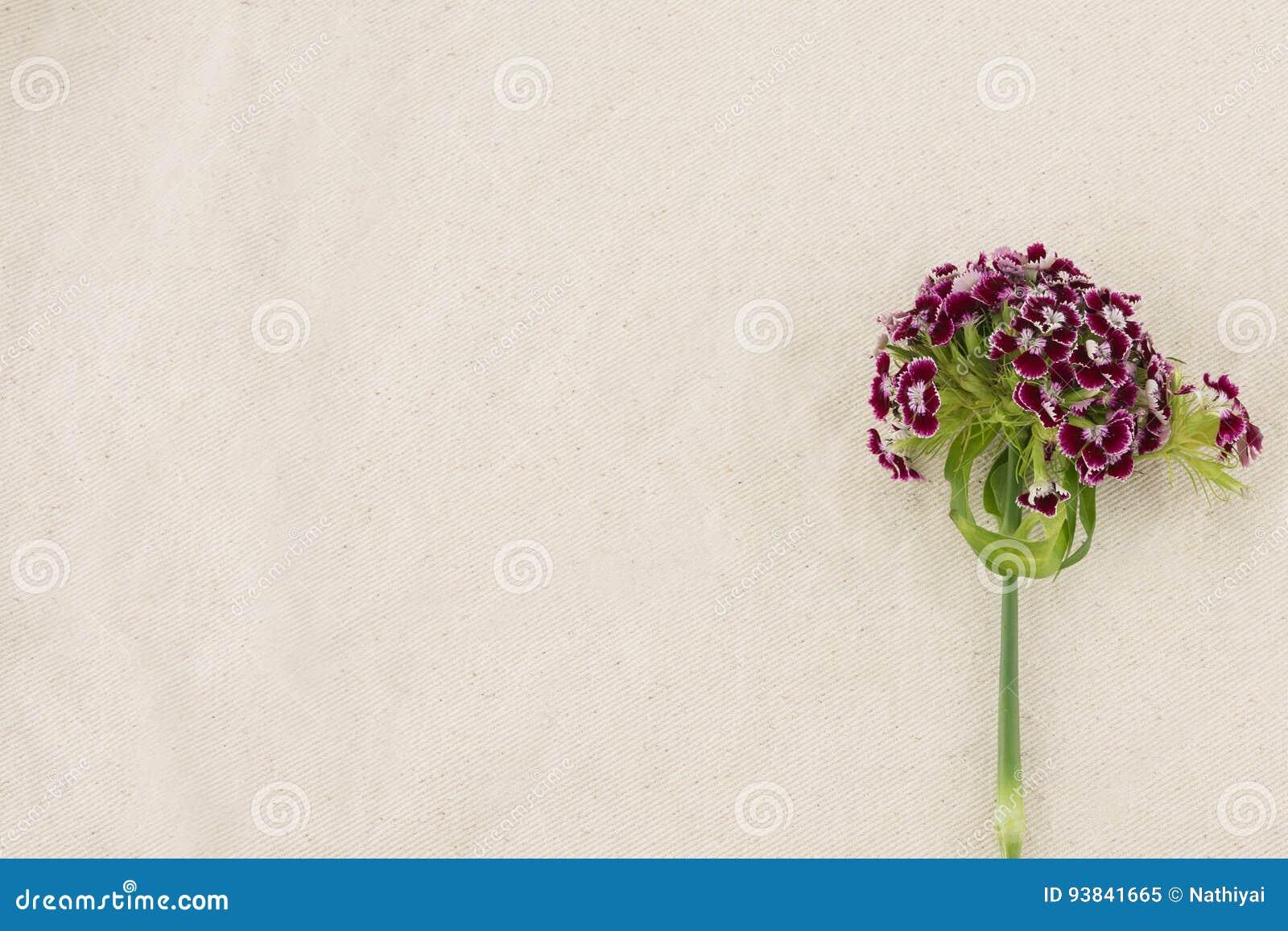 Flores dulces rojo oscuro de Guillermo