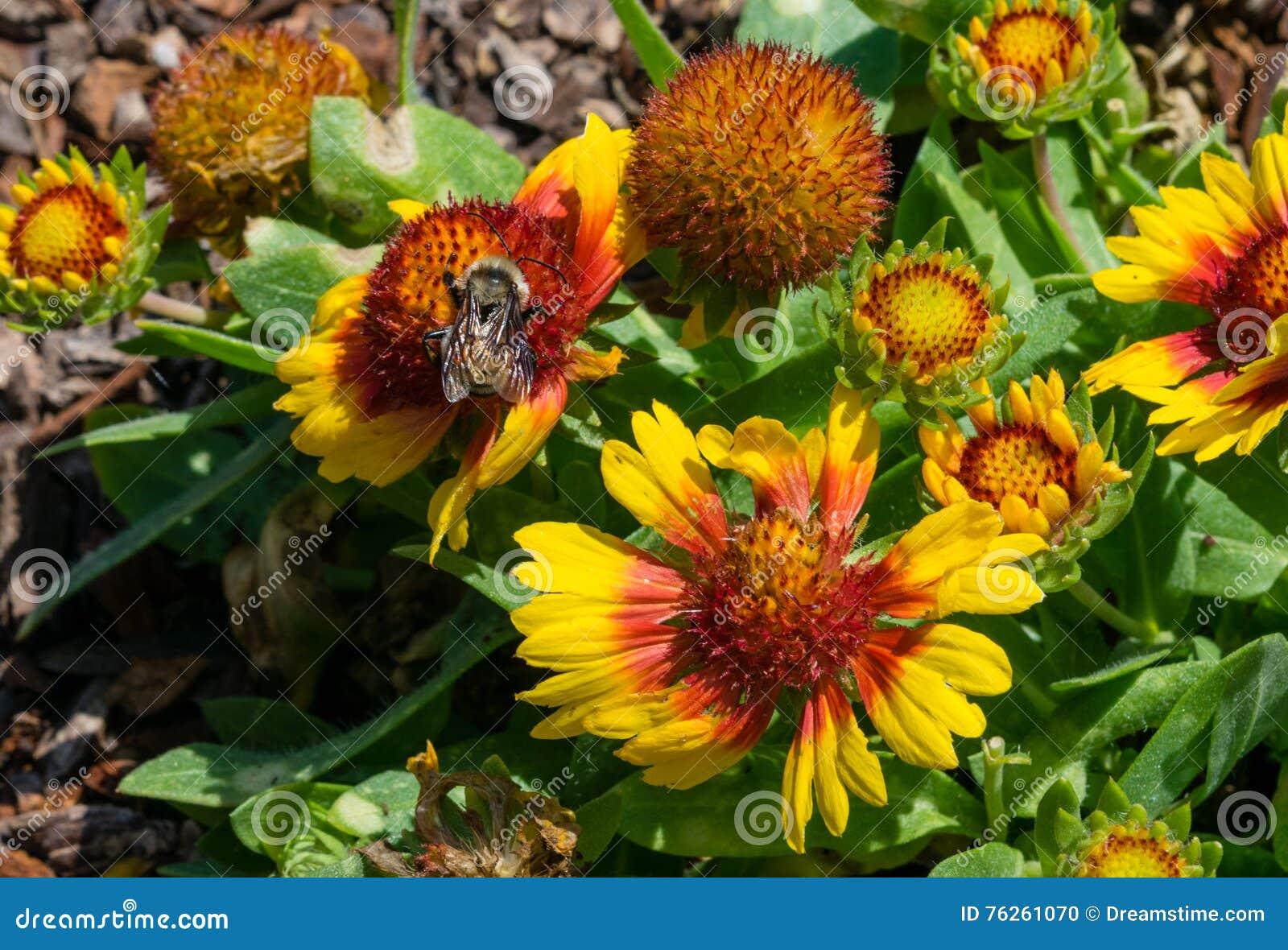 Flores e abelha