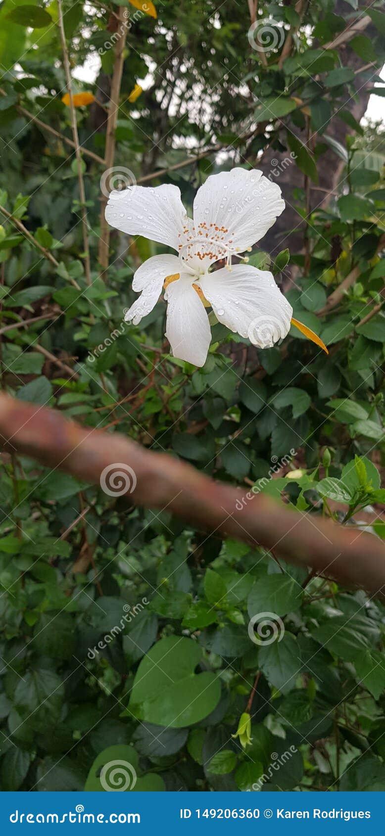 Flores e espinhos