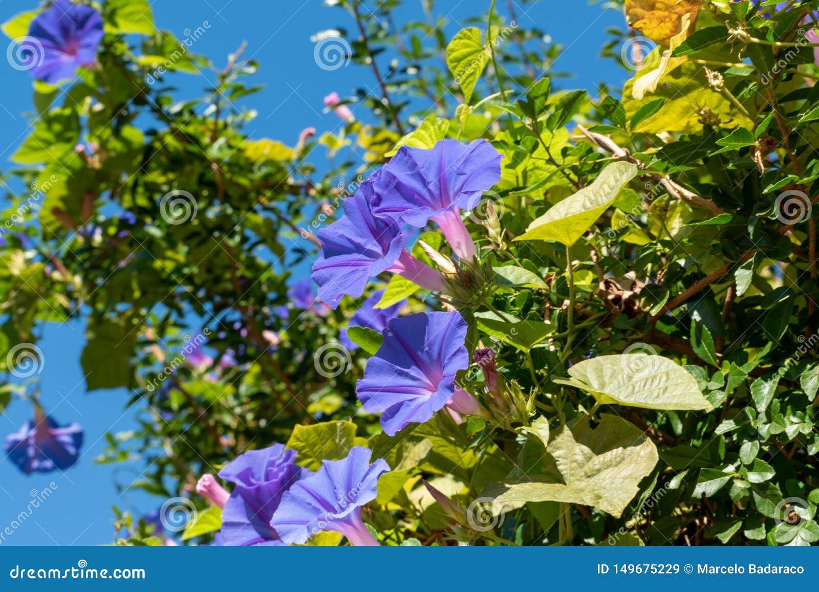 Flores e folhas pequenas de plantas selvagens do campo em Uruguai