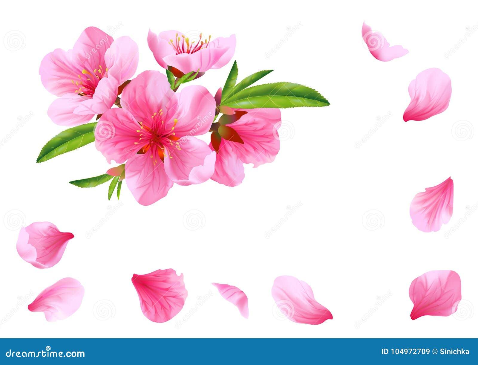 Flores E Petalas Do Pessego Vetor Ilustracao Stock Ilustracao De