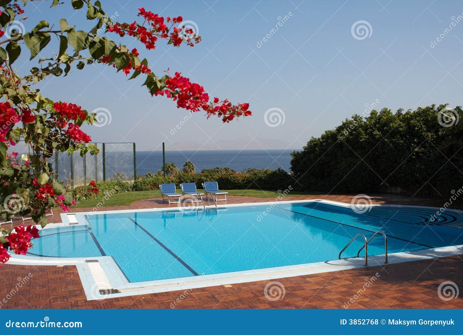 Flores e piscina vermelhas fotos de stock royalty free imagem 3852768 - Business plan piscina ...