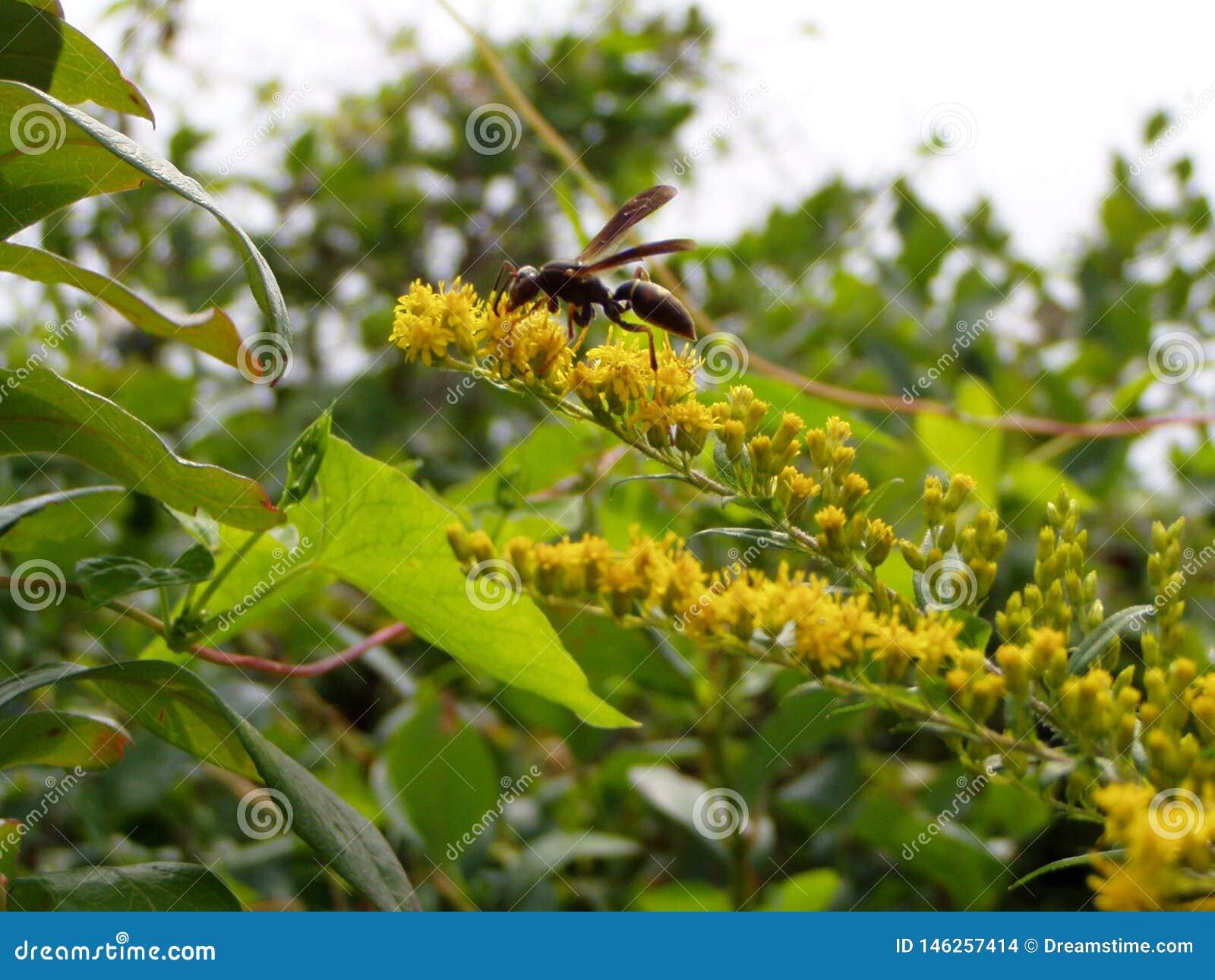 Flores e uma vespa