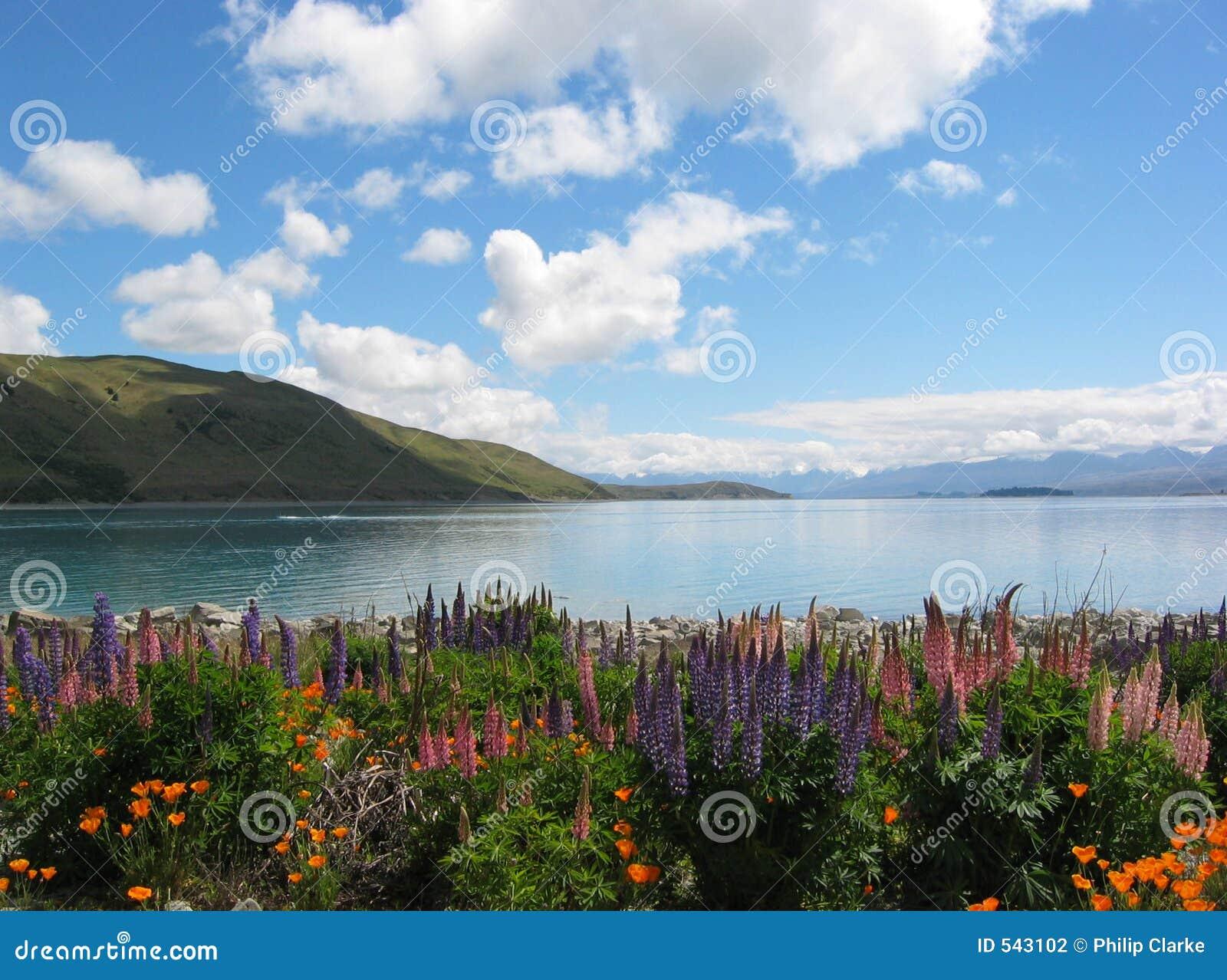 Flores em torno de um lago