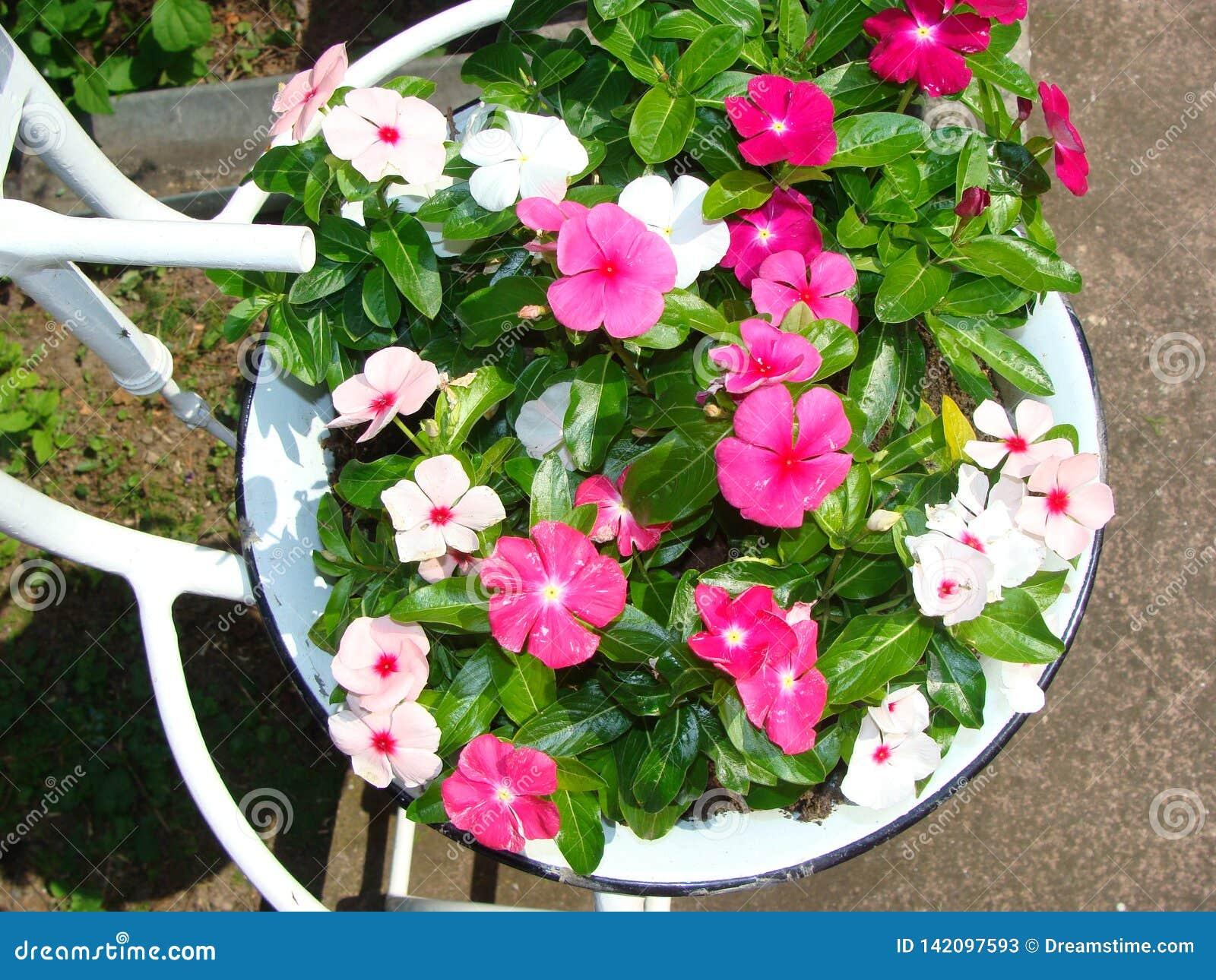 Flores em uma bacia do vintage