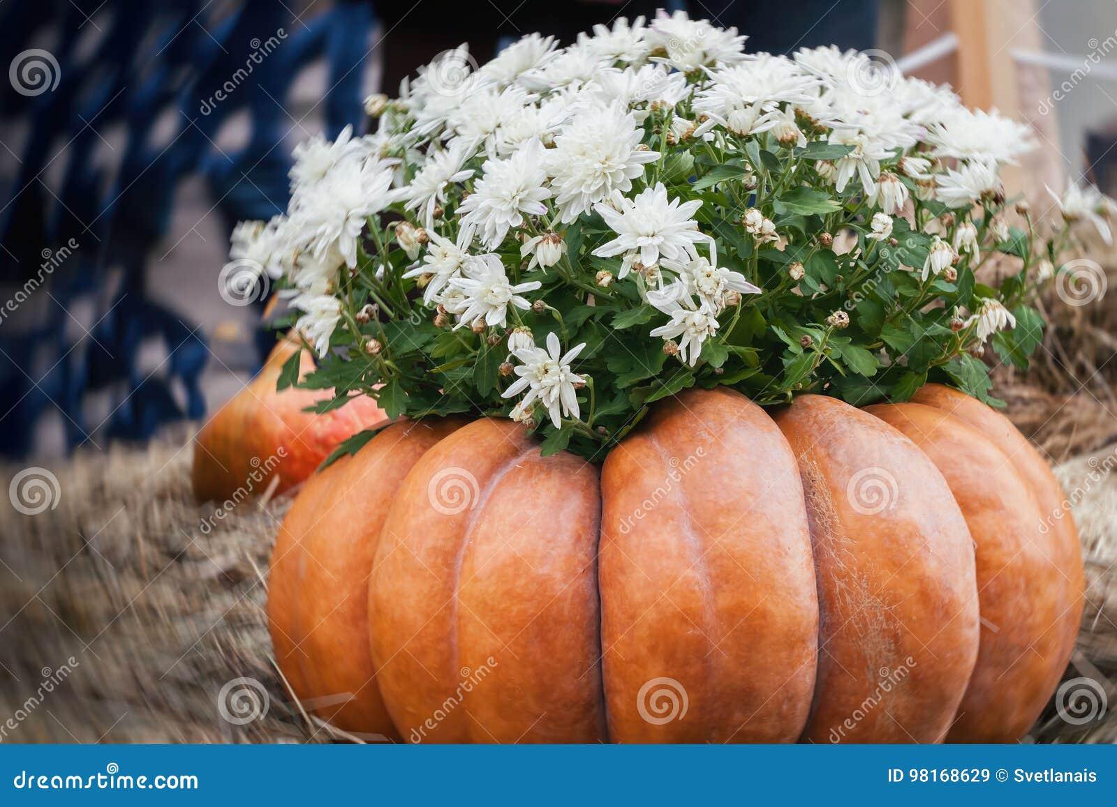 Flores en calabaza acanalada grande Día de la acción de gracias y decoración festiva y concepto de Halloween Otoño, fondo de la c