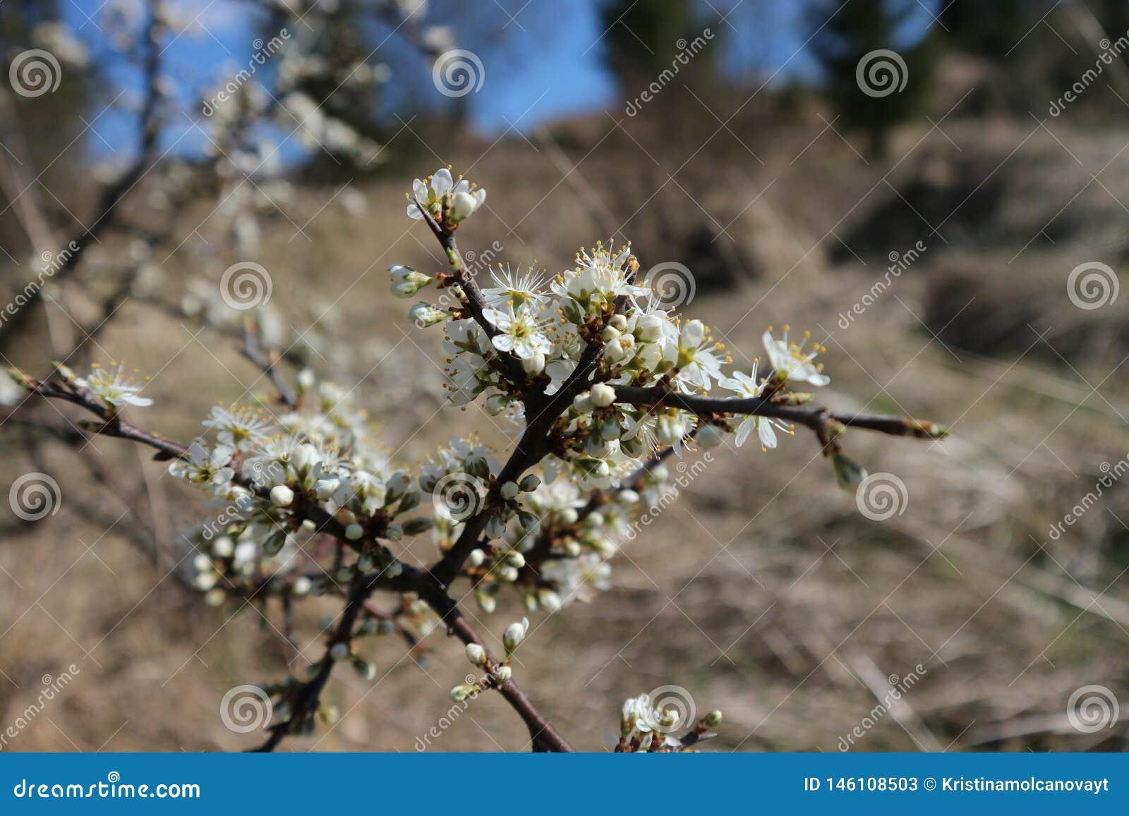 Flores en el árbol en la tierra