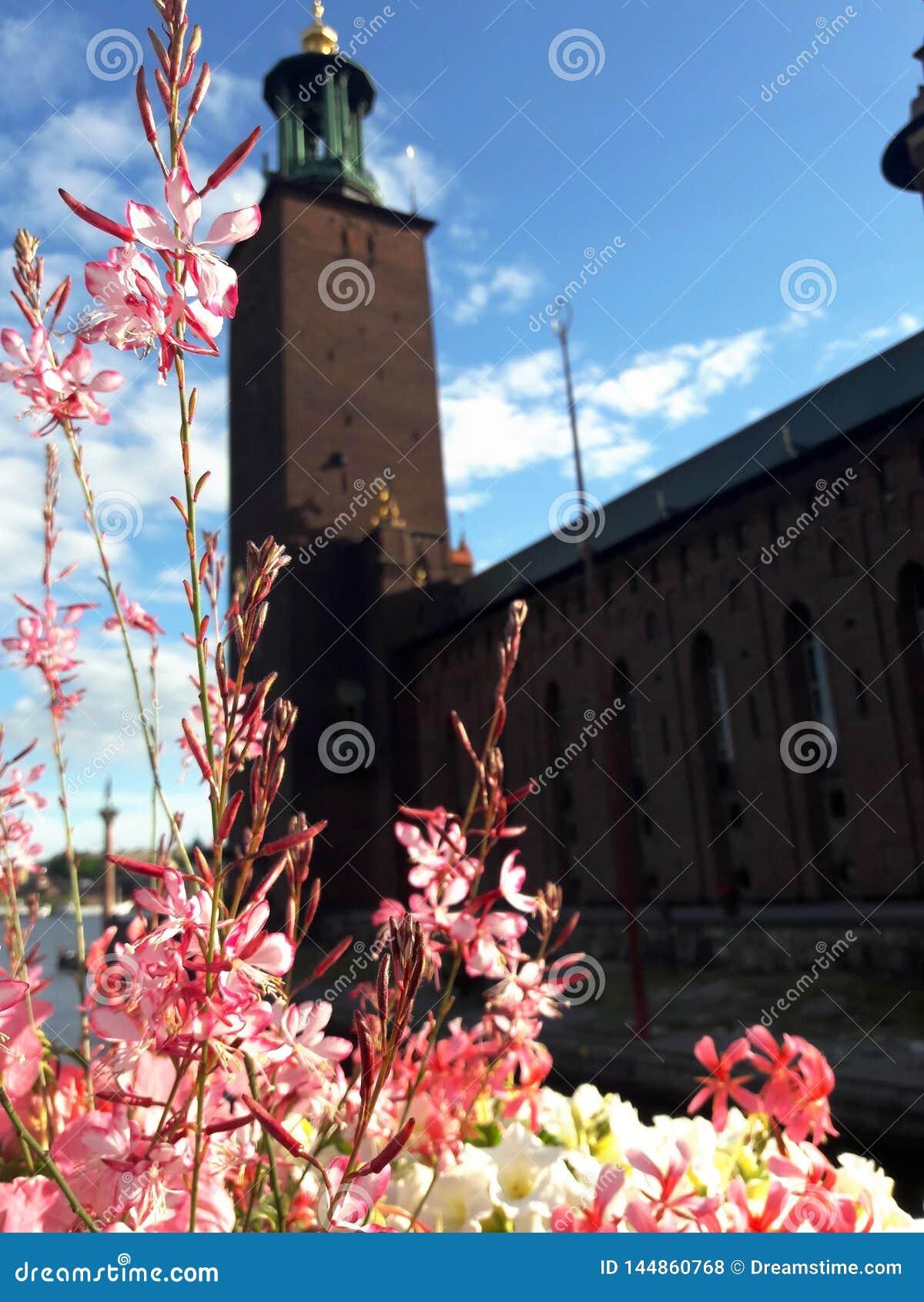 Flores en el fondo ayuntamiento de Estocolmo