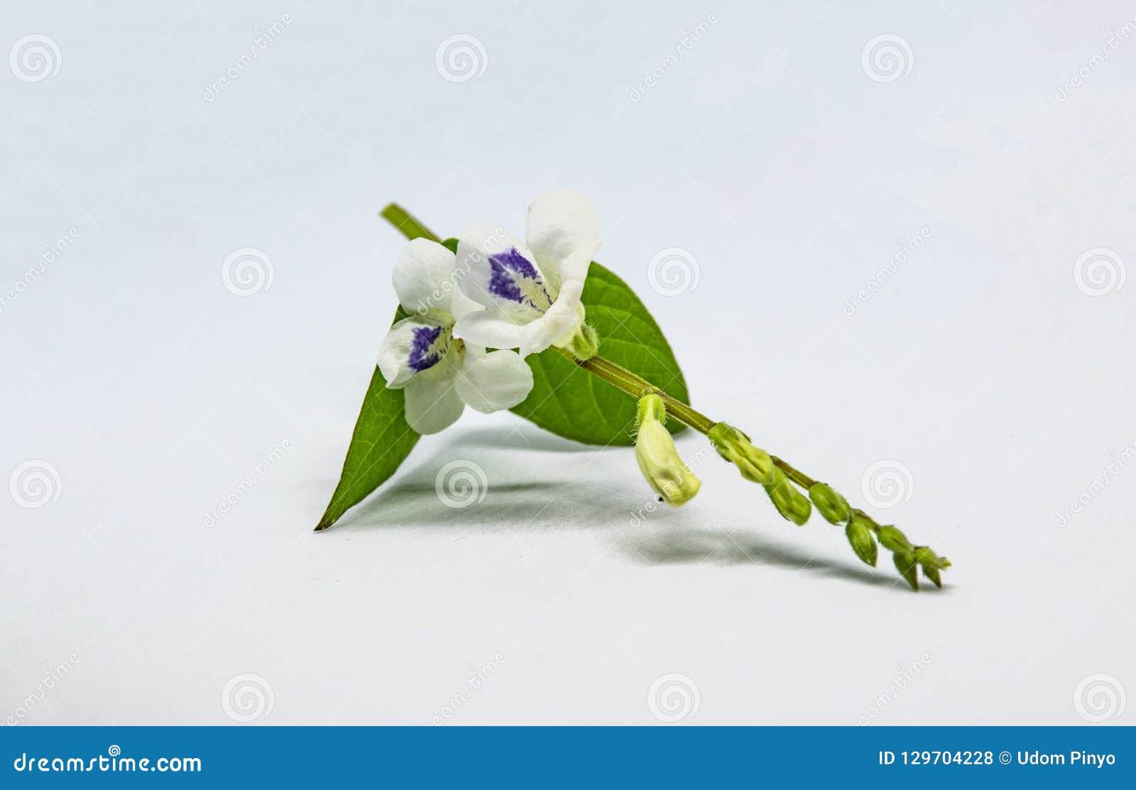 Flores en el fondo blanco