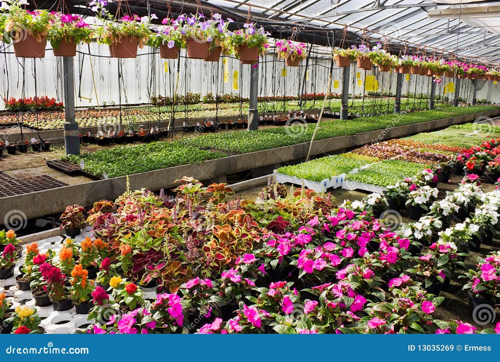 Flores en invernadero im genes de archivo libres de Plantas de invernadero