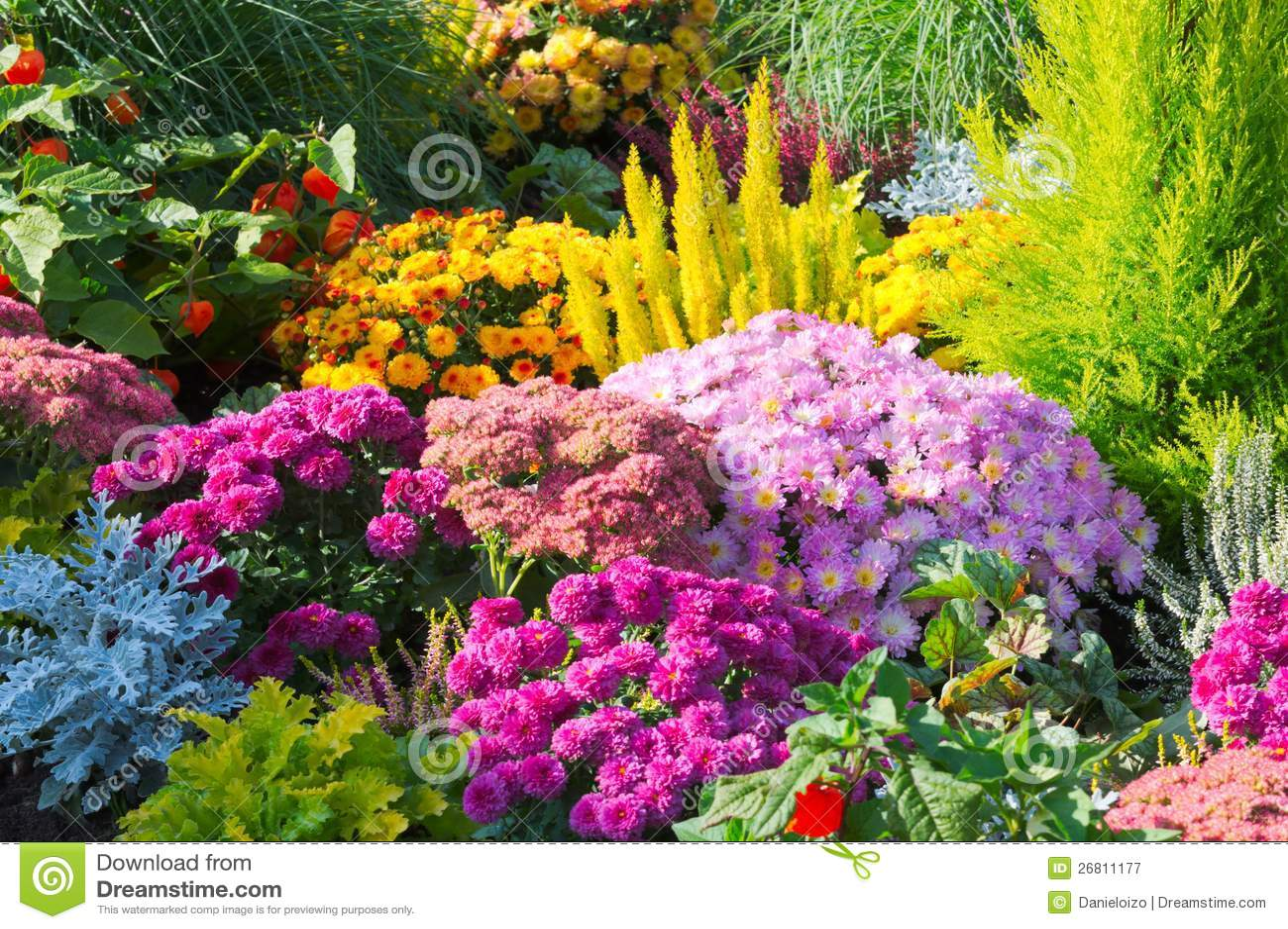 Flores en jardín