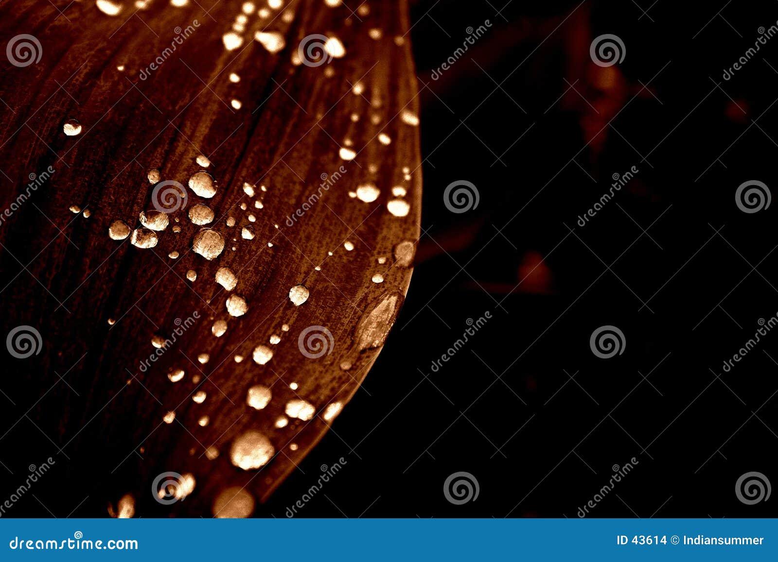Download Flores en la lluvia foto de archivo. Imagen de tulipán, tulipanes - 43614