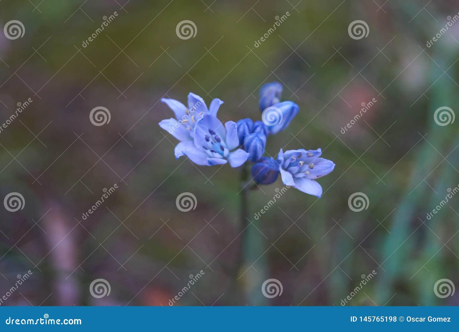 Flores en naturaleza en Cantabria