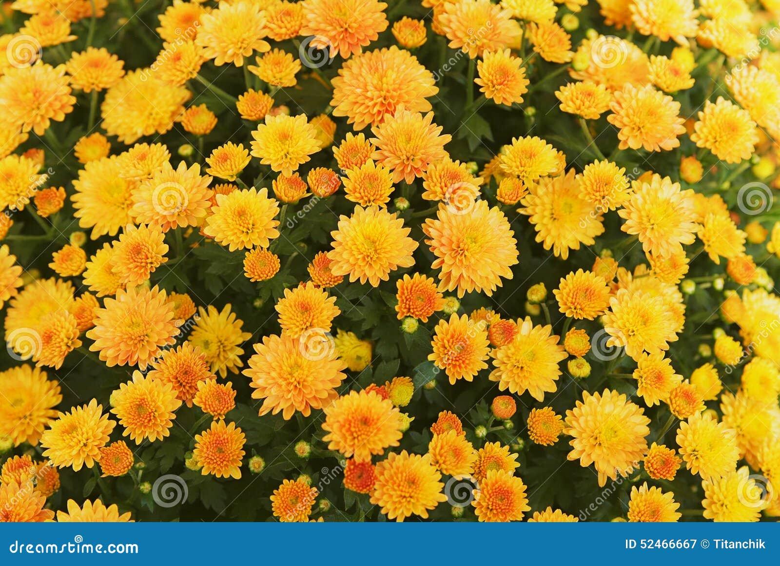 Flores en verano foto de archivo imagen 52466667 - Flores de verano ...