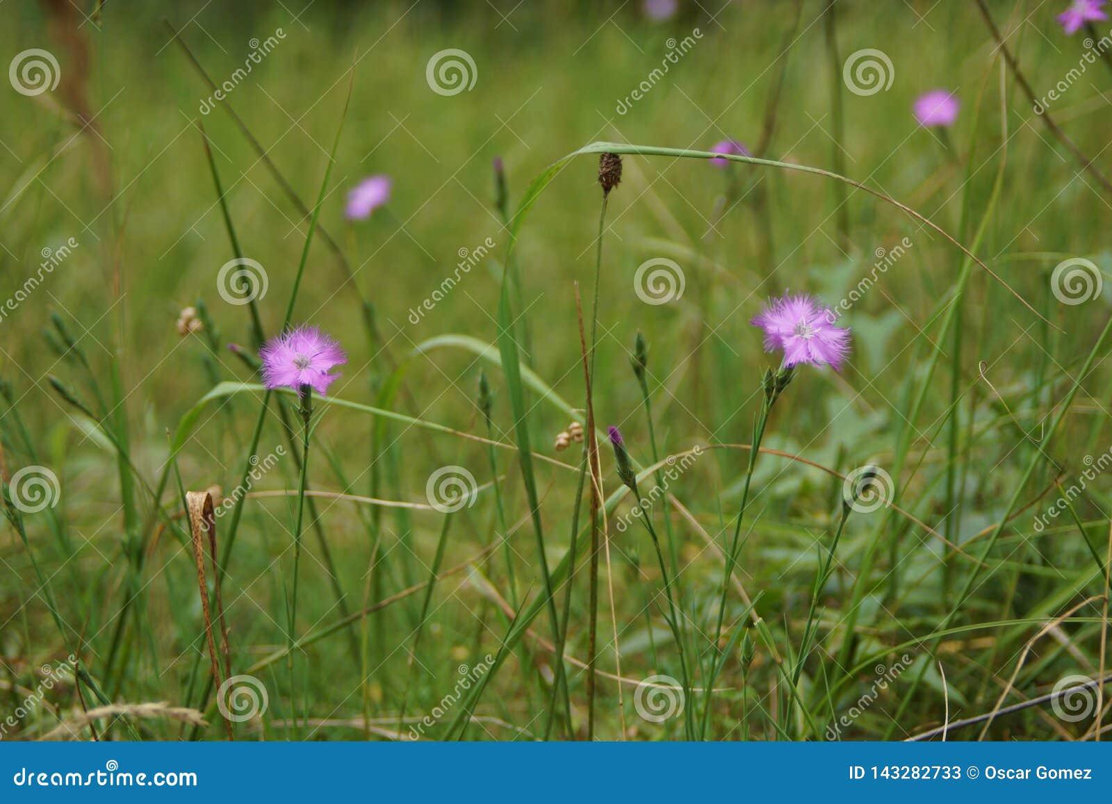 Flores en verano