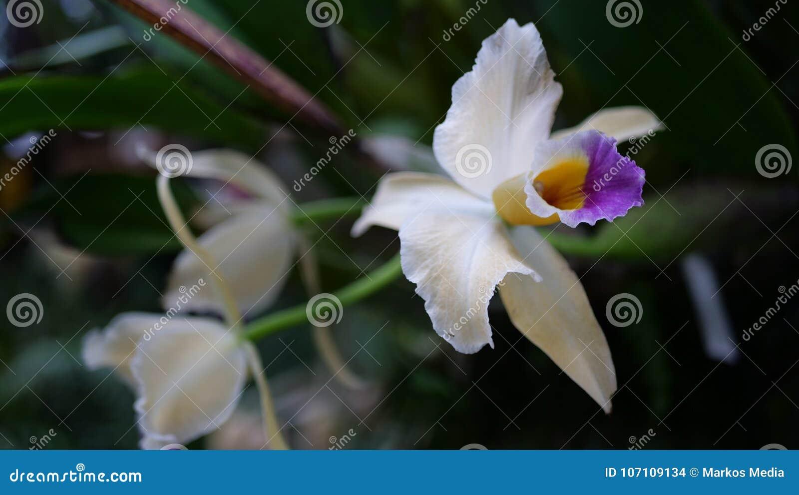 Flores Exoticas Bonitas Isoladas Com Fundo Verde Foto De Stock