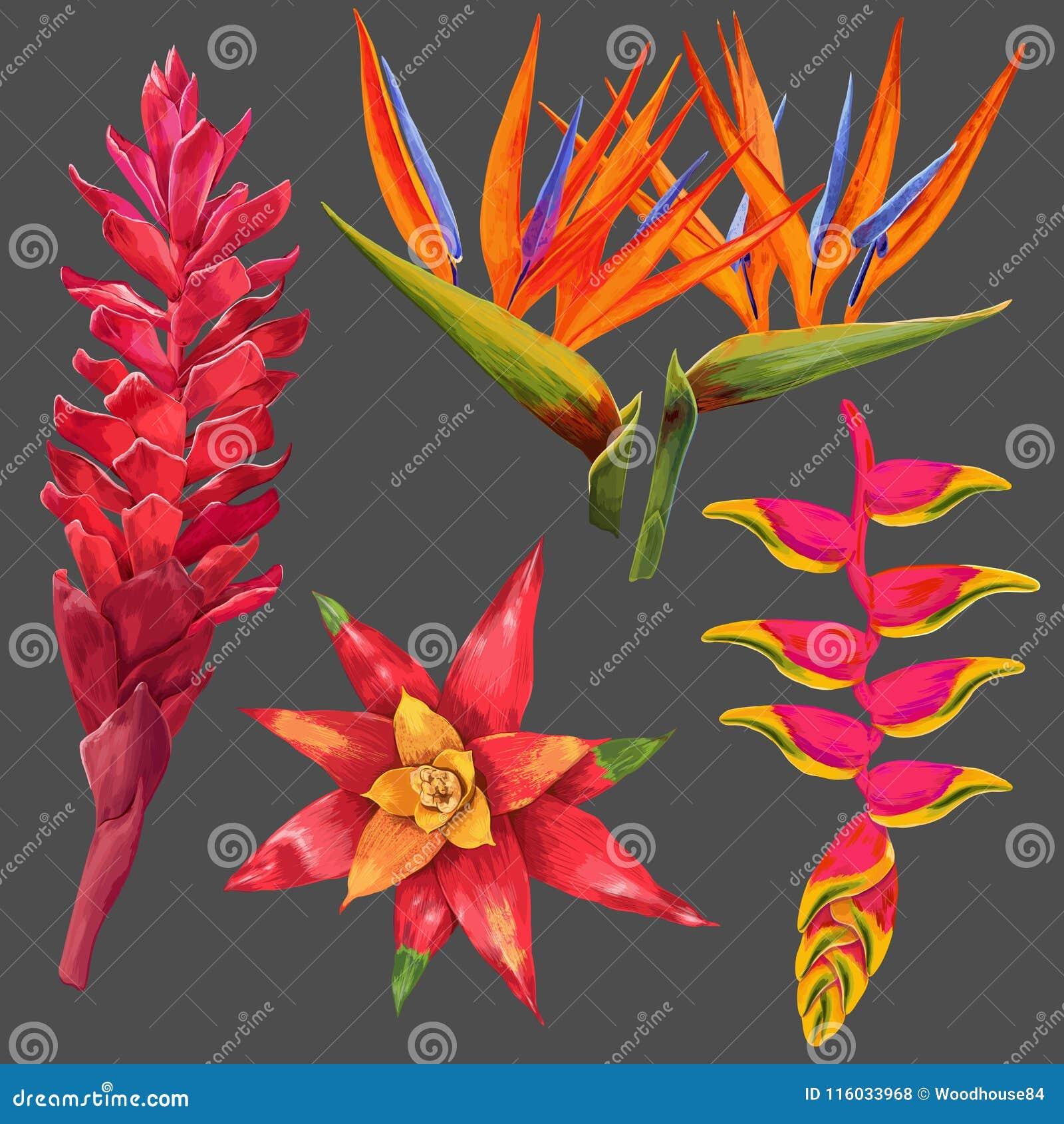 Flores exóticas e folhas ajustadas Elementos florais tropicais para a decoração, teste padrão, convite Fundo tropico