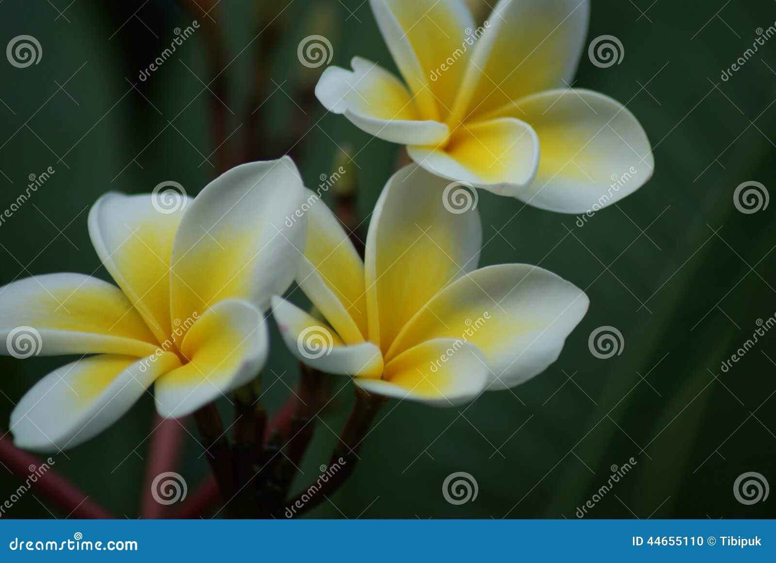 Resultado de imagem para flores exóticas
