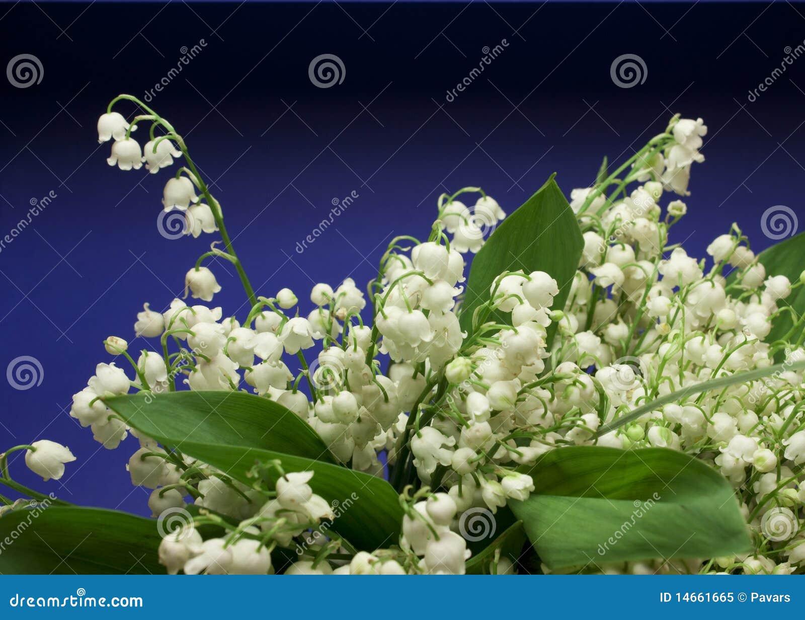 Flores frescas bonitas do lily of the valley foto de stock royalty free ima - Les plus belles suites parentales ...