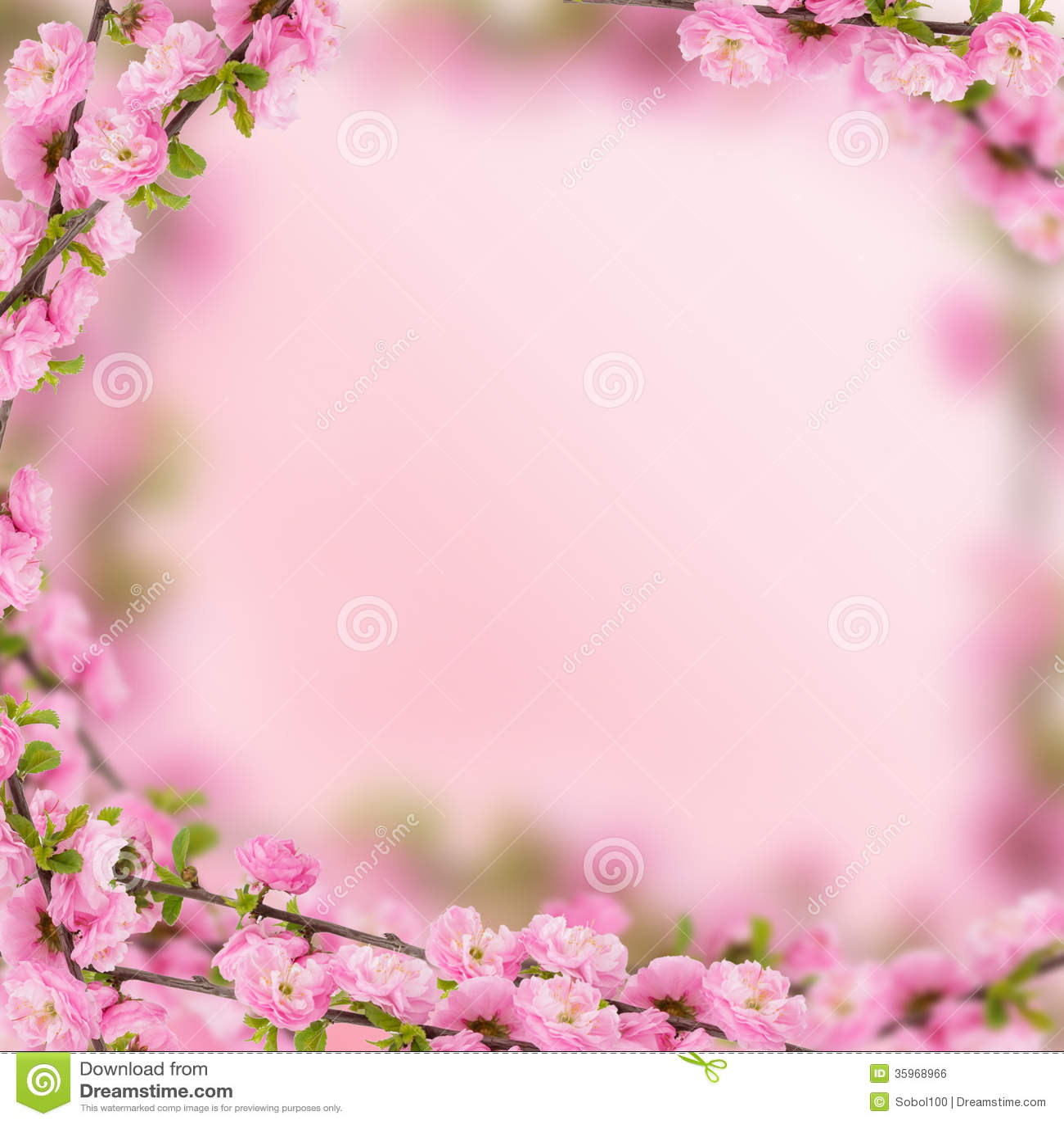 Flores frescas de la almendra en fondo rosado.