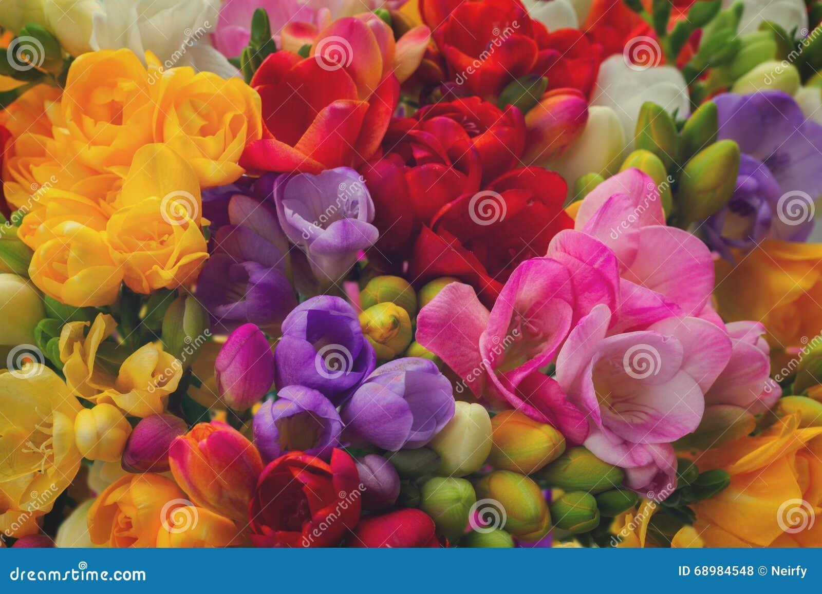 Flores frescas de la fresia
