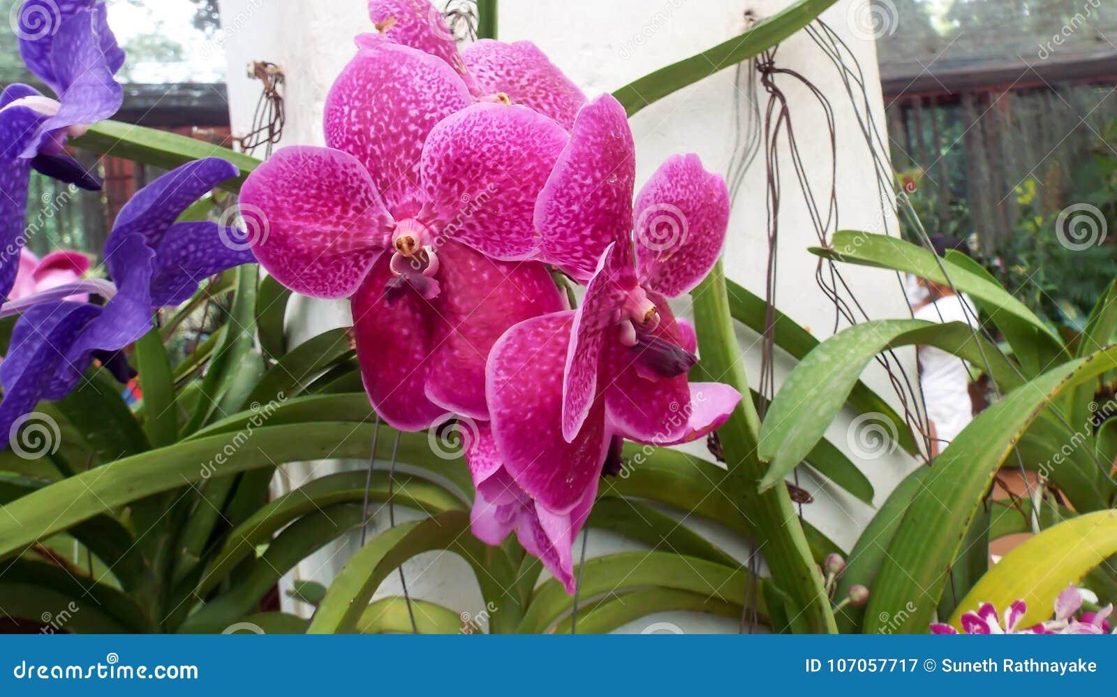 Flores frescas do jardim do jardim