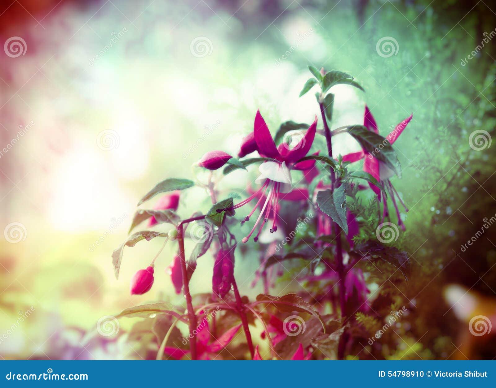Flores Fucsias Bonitas En El Fondo Del Jardin Del Verano Cierre - Flores-bonitas-para-jardin