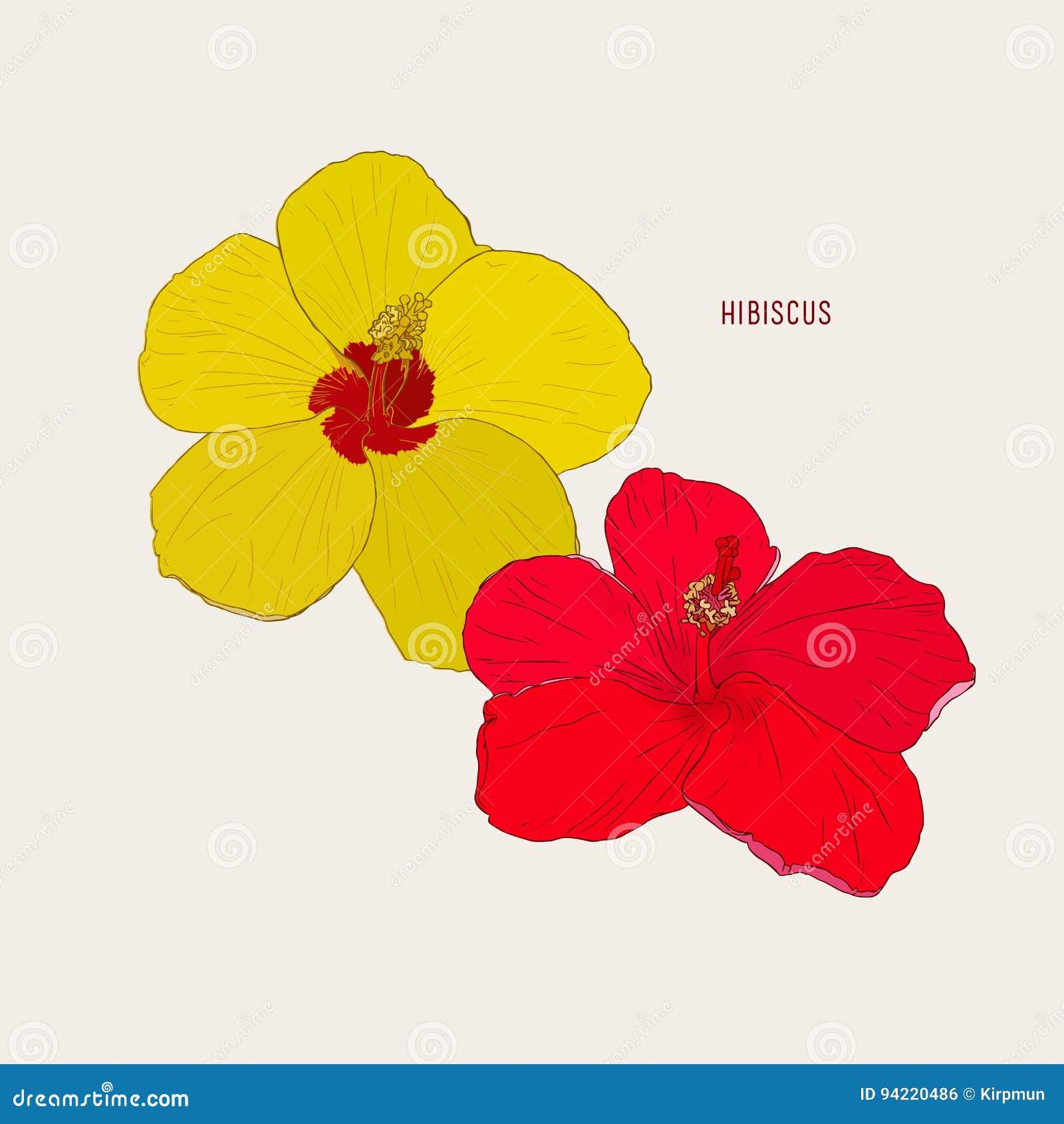 5 Flores Hawaianas Del Hibisco Stock de ilustración - Ilustración de ...
