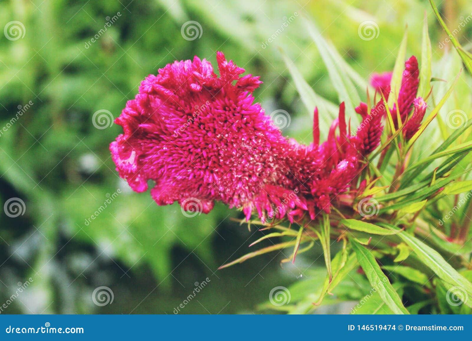 Flores hermosas convenientes para plantar en el jardín
