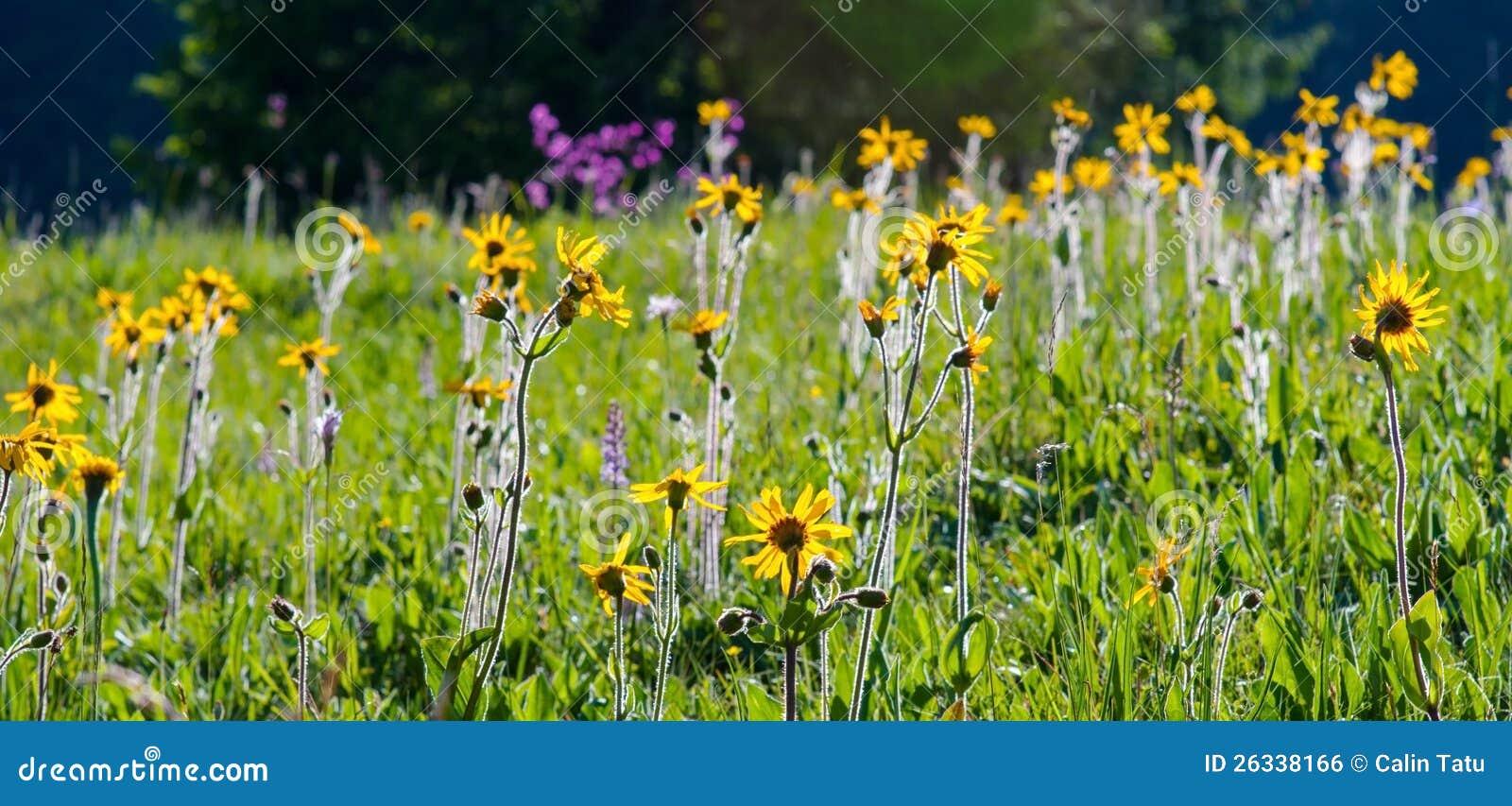 De Flores En La Montana: Flores Hermosas De La Primavera En Un Bosque De La