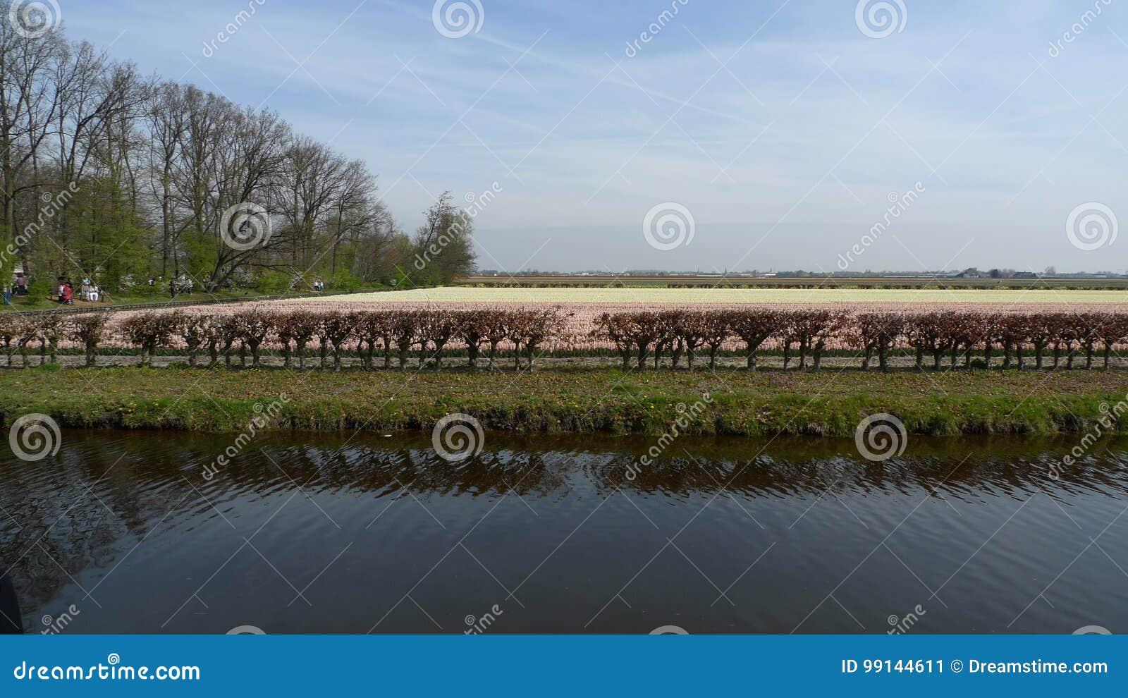 Flores hermosas de Países Bajos en primavera