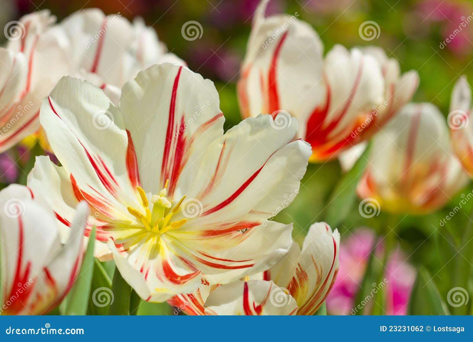 Jardin De Flores Hermosas Flores De Jardin Bonitas Que No Deben - Flores-bonitas-para-jardin