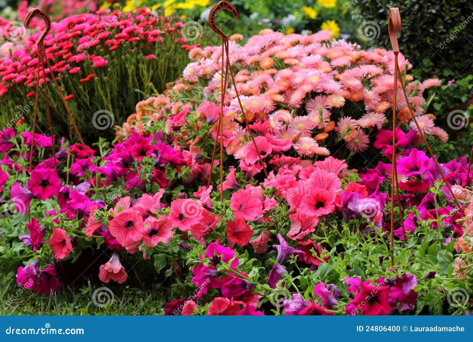 Flores hermosas del verano foto de archivo imagen 24806400 - Flores de verano ...
