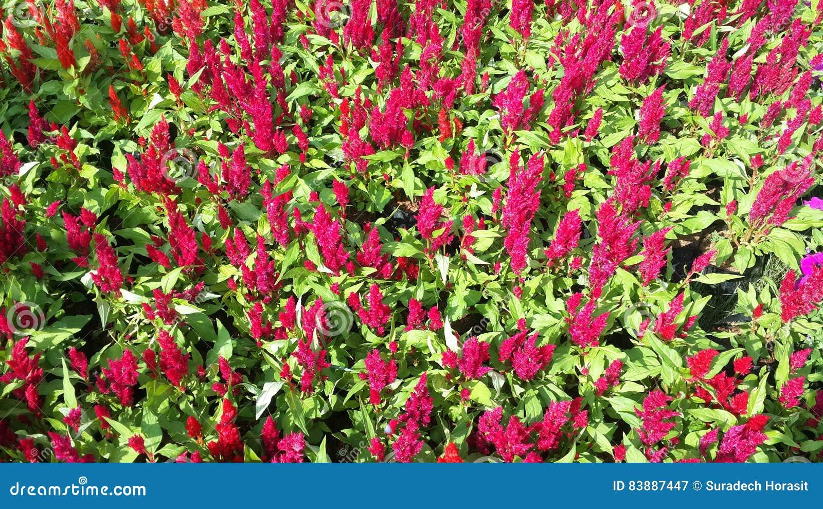 Flores hermosas en el jard n debajo del sol del invierno foto de archivo imagen 83887447 - El jardin del sol ...